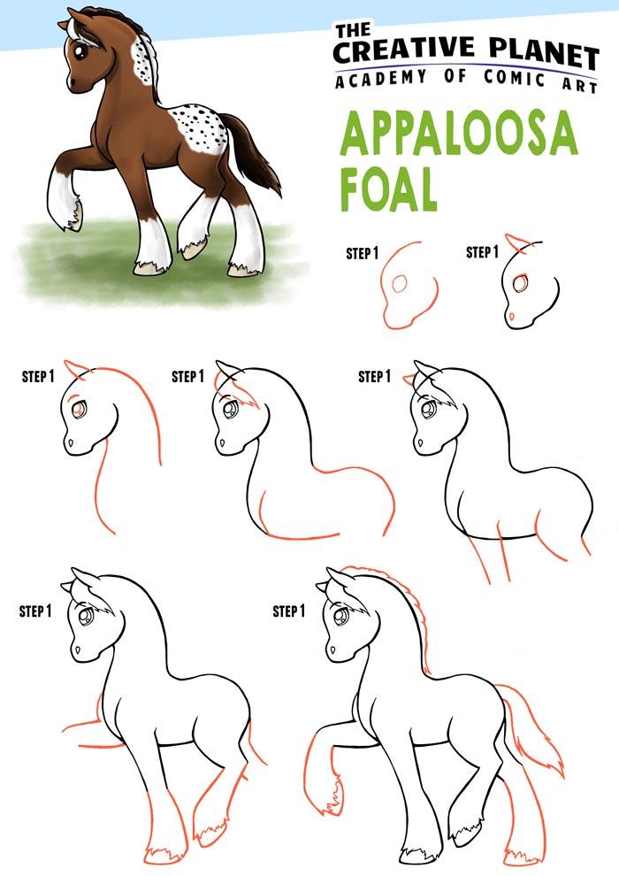 Appaloosa-Foal